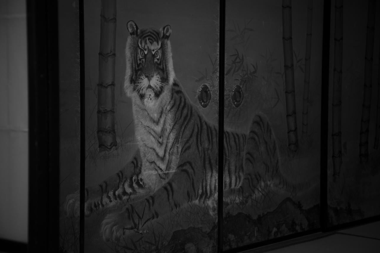 ぼくを睨んだ虎を狩る